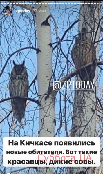 В Запорожье поселились дикие совы