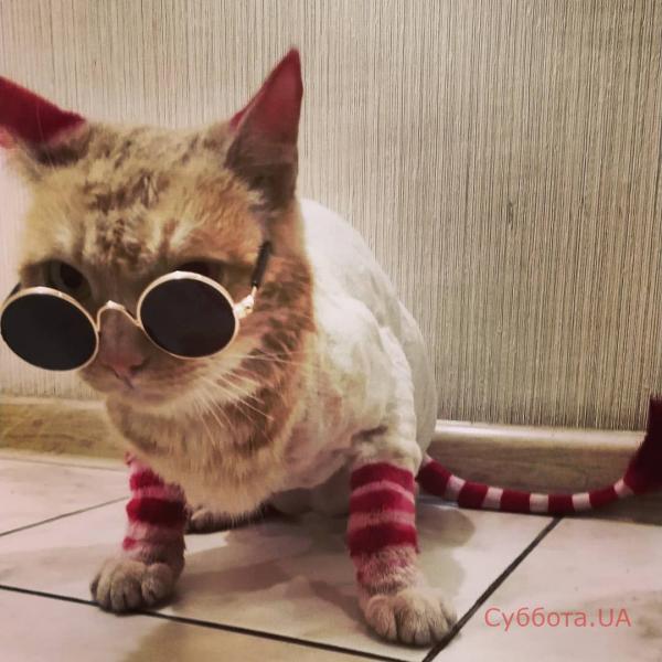Тот еще модник: в Запорожье живет кот с модной стрижкой и любовью к водным процедурам