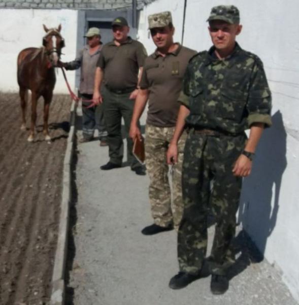 В исправительной колонии Запорожской области лошадь помогает вычислять подготовку побега