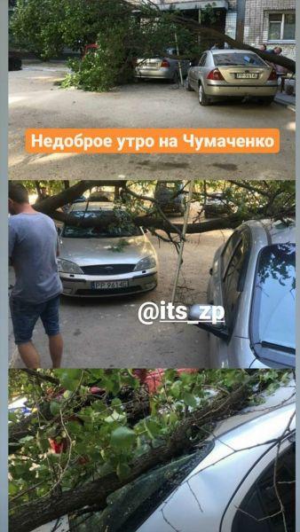 В Запорожье на машины рухнуло старое дерево