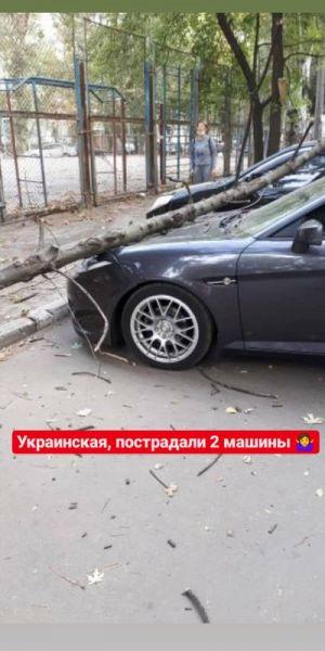 В Запорожье во дворах падали деревья: повреждены три авто